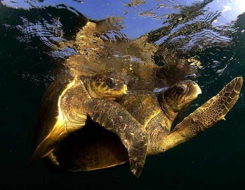 Tartarughe d 39 acqua amore bestiale acqua sporca for Acqua tartarughe