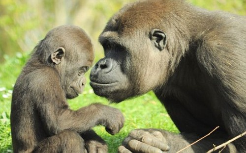 sciemmie ai giardini zoologici