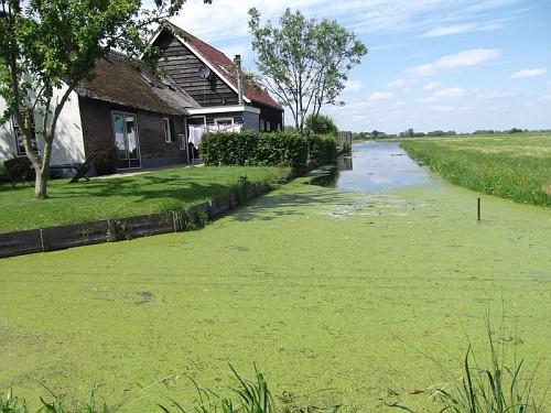Gouda Verde
