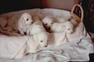 sono nati i cuccioli 20 gennaio 1991