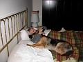 Il mio cane, i giovani e il lavoro che non c'è. DSCN5226-th