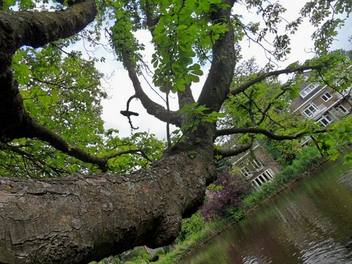 Amsterdam parco Albero
