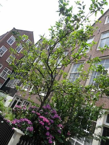 Amsterdam Beghine Case tipiche